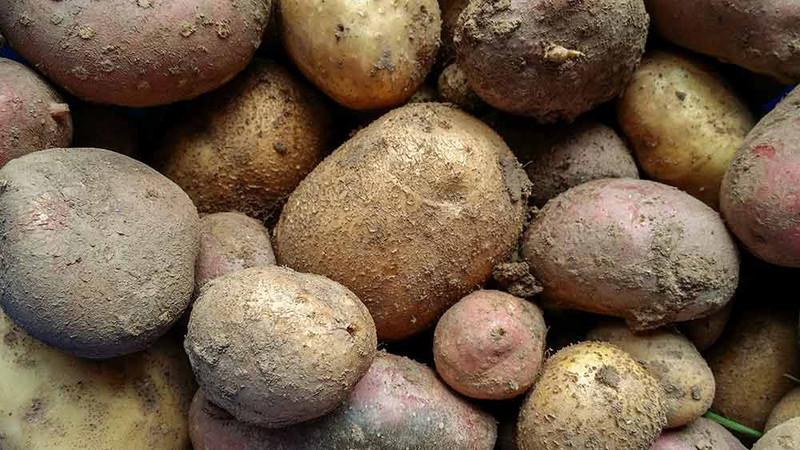 Meine Ernte: Kartoffeln Anbauen, Pflegen, Ernten Und Lagern Garten Mit Kartoffeln Pflege Tipps