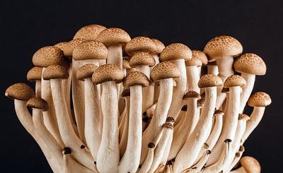 Pilze selbst züchten