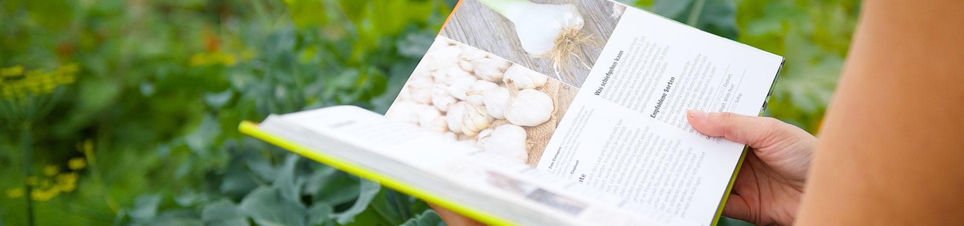 chinakohl pflanzen tipps garten pflege, meine ernte: chinakohl anbauen, pflegen, ernten und lagern, Design ideen